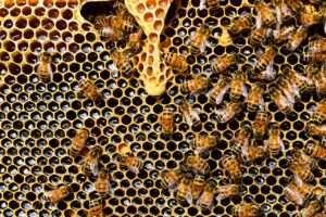 اكتشف الفوائد المذهلة لتناول عسل النحل على الريق