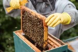 مصدر عسل الغابة السوداء وأهم فوائده